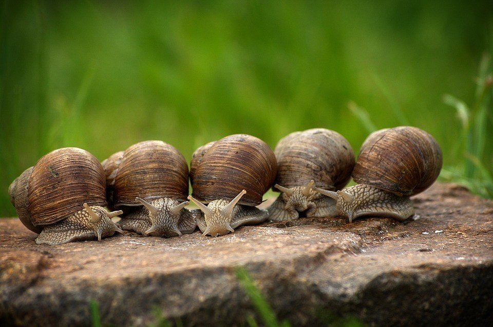 New treatment for Alzheimer's! Scientists transferred memory between snails