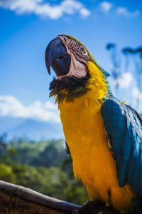 Scientists unveil the secret to intelligence in parrots