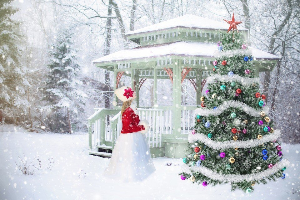 Amazon will sell live 7-foot christmas trees this holiday season